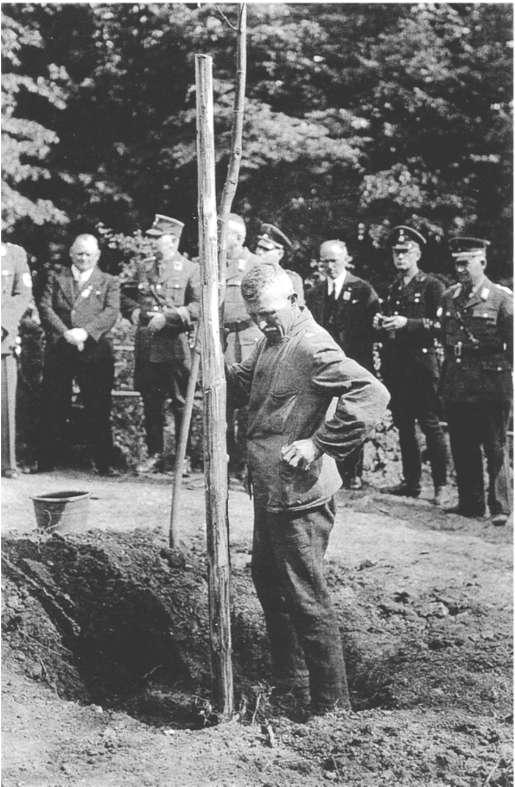 So könnte es auch in den Rothenburger Dörfern ausgesehen haben. Hitler-LInde in Gerolstein.