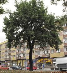 Eiche-Lindjaslo