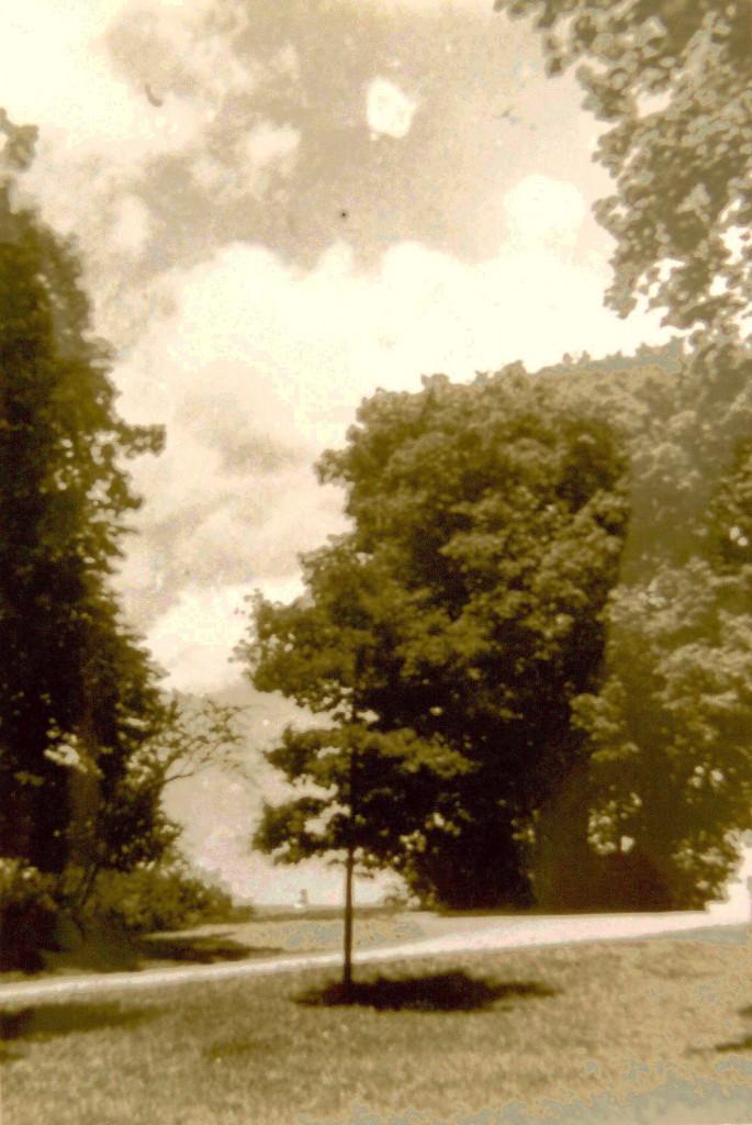 Hitler-Eiche im Burggarten; Foto: Sammlung E. Tittmann